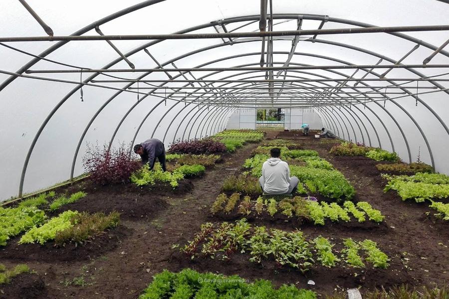 """IAPMEI premeia """"As Nossas Quintas"""" como empresa responsável e inclusiva"""