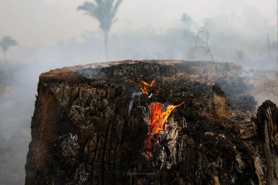 Papa inaugura Sínodo da Amazónia pedindo que se evitem «colonialismos» do passado