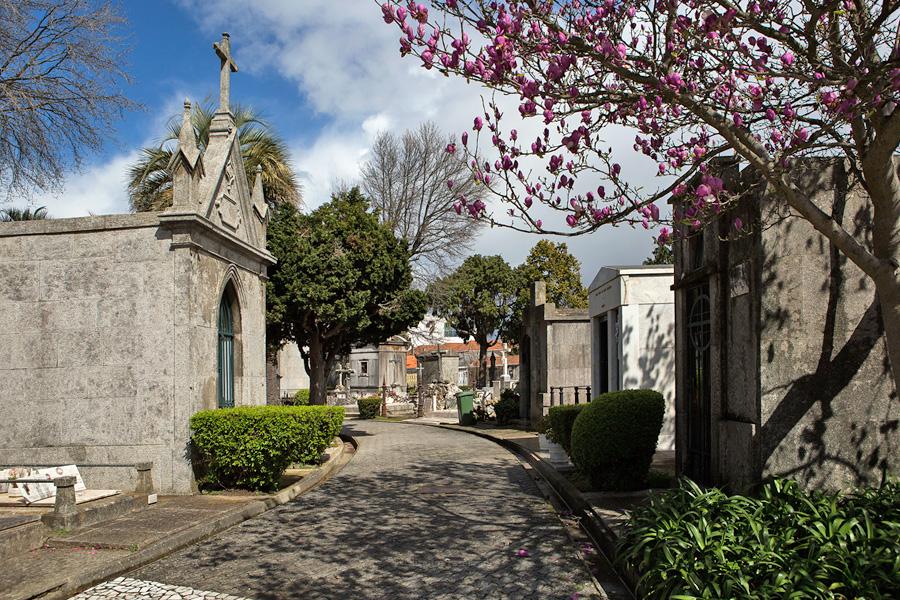 """Bispos portugueses apelam à responsabilidade na """"romagem"""" aos cemitérios"""